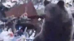 Мужчина нарычал на двух медведей на свалке в селе Ямала