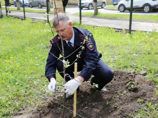 Яблоневый сад высадил в Пскове начальник городской ГИБДД Владимир Папорт