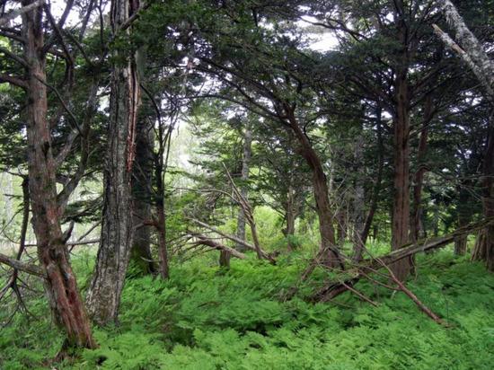 Хрупкую экосистему из девяти курильских островов берегут уже 38 лет