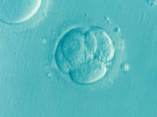 В РПЦ призвали принять закон об усыновлении замороженных эмбрионов