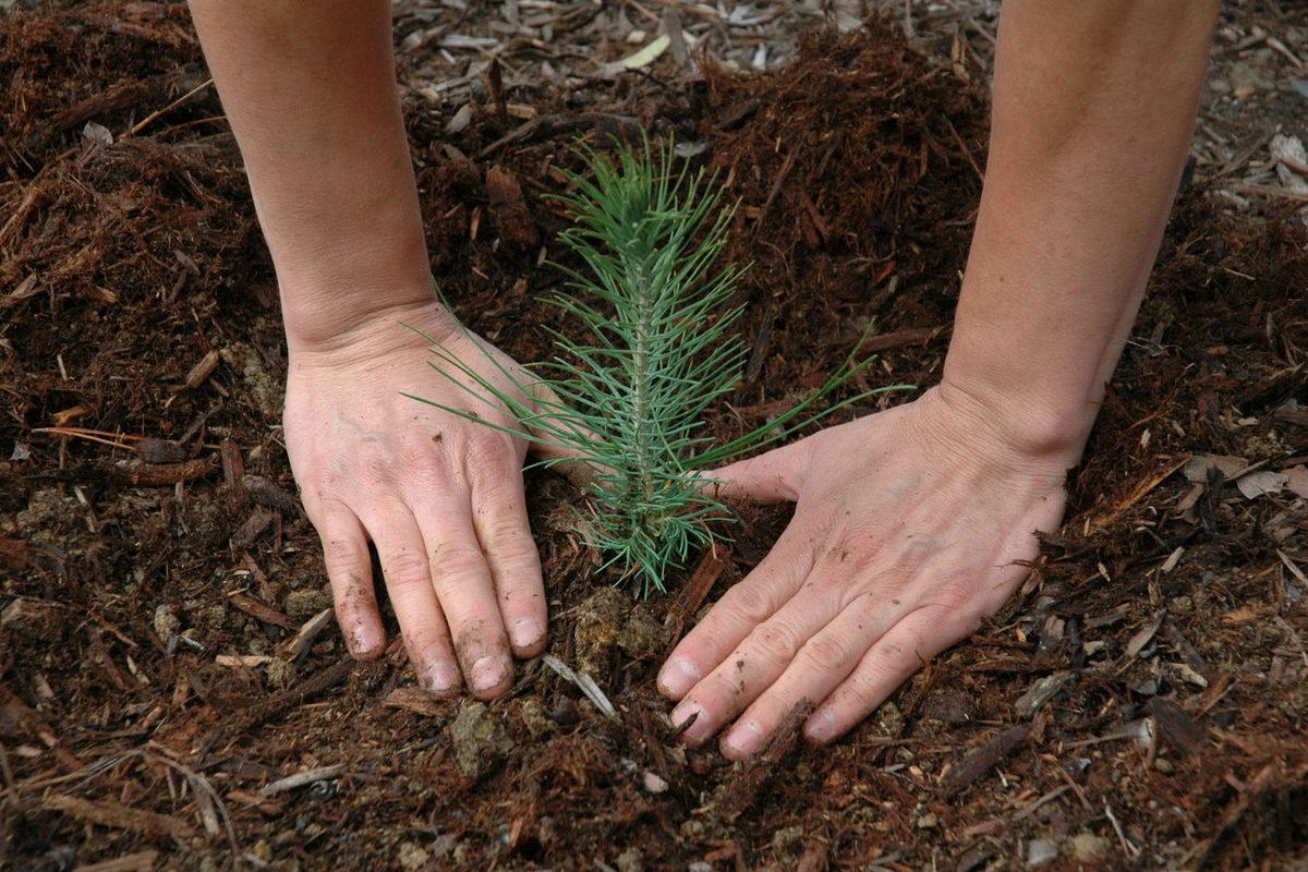 Сегодня костромичам предлагают засадить лесом участок у деревни Митенькино