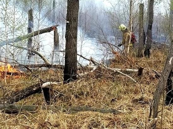 Жителям Омской области на три недели запретят посещать леса
