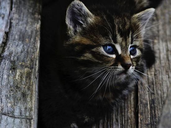 Москвичка выкинула из окна два десятка кошек