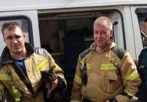 На пожаре в Иркутске пожарные спасли кота