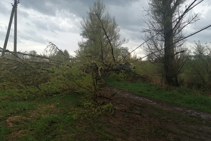Оперативный штаб в Костроме координирует усилия по ликвидации последствий урагана