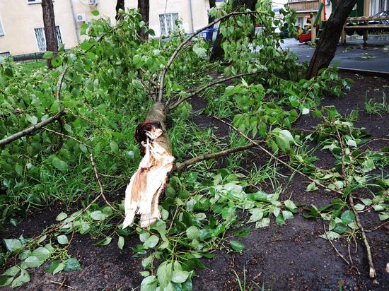 Из-за грозы в Москве госпитализированы несколько человек
