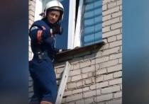 В Новосибирске спасли застрявшую лапой в окне кошку