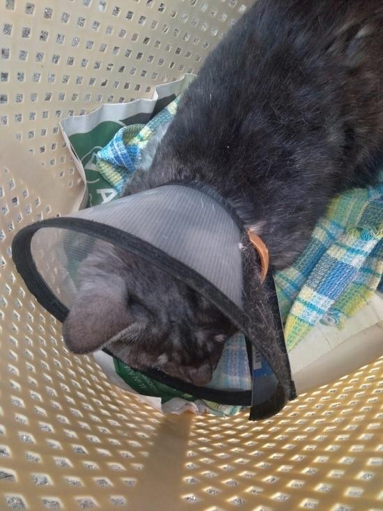 Изувеченную живодерами кошку Дымку из Тверской области будут лечить в Москве