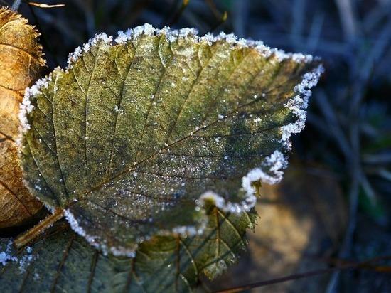 С 19 по 21 мая в Томской области ожидаются заморозки