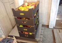 Россельхознадзор в Улан-Удэ уничтожил запрещённые к ввозу яблоки