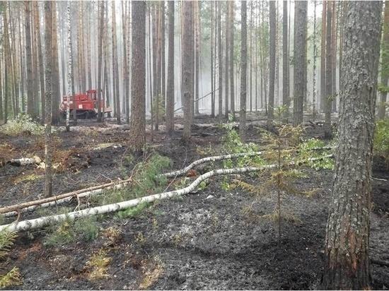 Лесной пожар в Ивановской области тушили больше двух часов