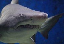 В Австралии акула загрызла серфера