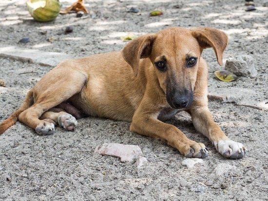 Сейчас во многих районах Алтайского края сформировалась плачевная ситуация – бездомных животных некому отлавливать, содержать и лечить