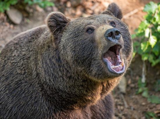 В Хабаровском крае медведь растерзал охотника