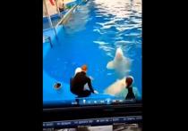 В Приморском океанариуме во Владивостоке — очередной скандал