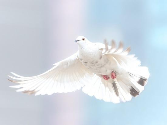 Чтобы не загрязнять природу, можно запускать в небо голубей