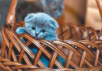 Статус большинства российских домашних животных остается туманным: теоретически никто может и не узнать никогда, что у вас есть кошка, если она не покидает квартиры
