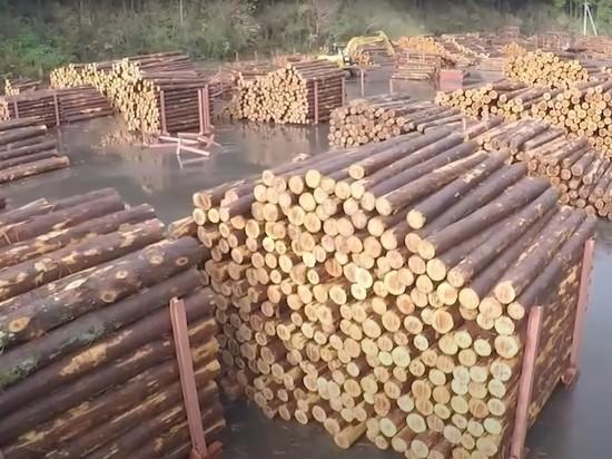 ОПГ вывезла в Китай российский лес более чем на 80 млн рублей