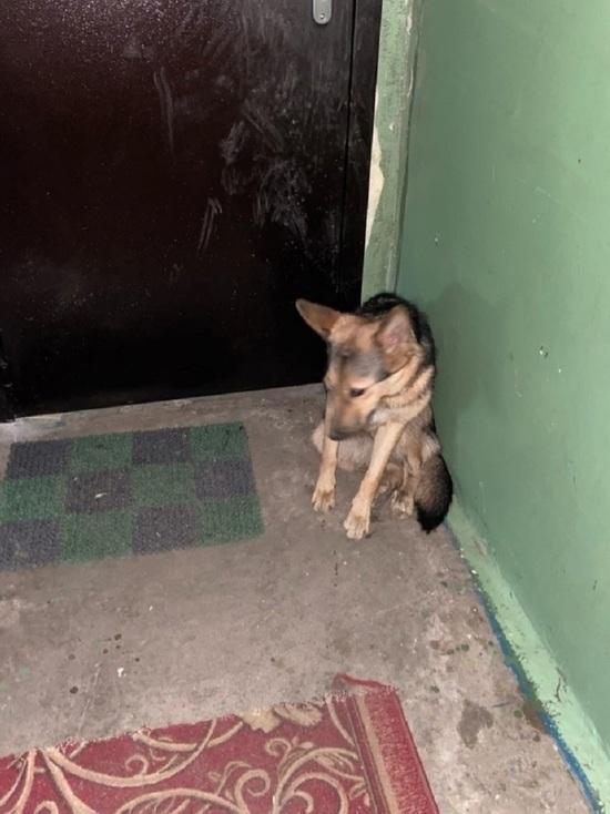 Мурманчане при переезде бросили собаку в подъезде