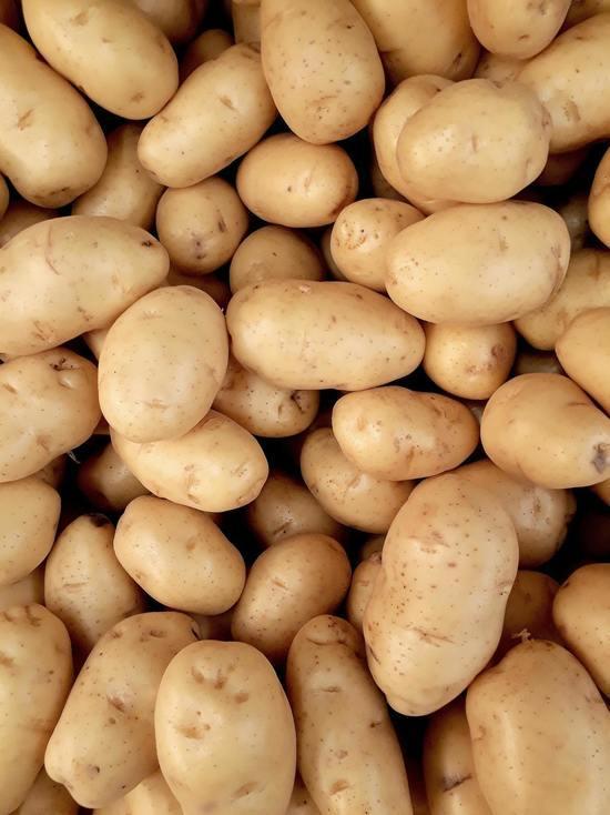 На полях под Псковом заключённые завершили посадку картофеля