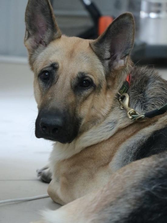 В России начнут вести учет домашних и бездомных животных