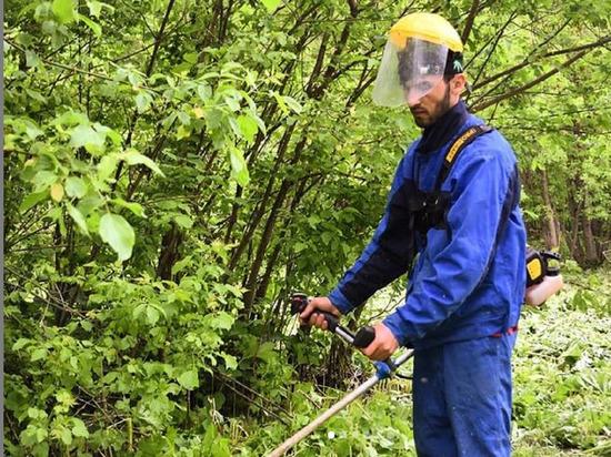 Более ста тридцати гектар очистят от борщевика в Серпухове