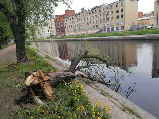 Ураган за несколько дней уничтожил сотни деревьев в Петербурге