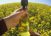 В России рассказали о перспективах перехода на биотопливо