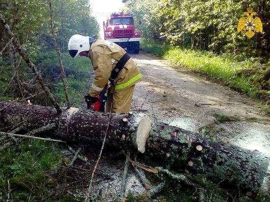 В Тверской области освободили дороги от упавших из-за ветра деревьев