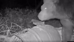 Медведь попозировал для фотоловушки сахалинца