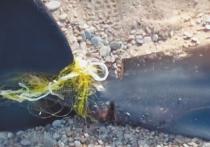 В Крыму на дне моря экологи обнаружили дельфинов, к хвостам которых для утяжеления были привязаны камни