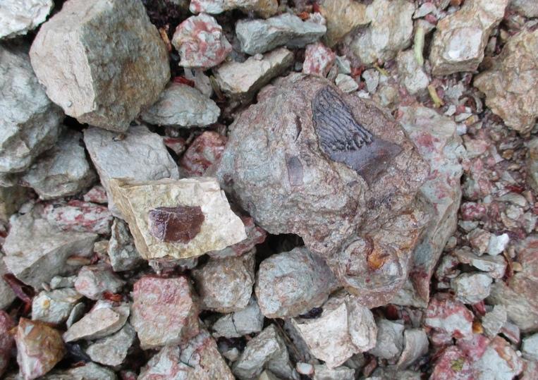 В Тверской области нашли окаменелости древнейших рыб