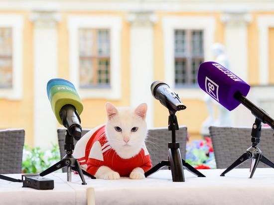 Эрмитажный кот Ахилл согласился стать оракулом на Евро-2020