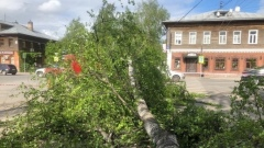 Упавшее дерево оборвало линии электропередач на перекресте улиц Чехова – Галкинская в Вологде