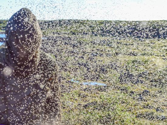 «За два дня в селе Выползово насекомые убили девять коров, люди не выходят из домов»