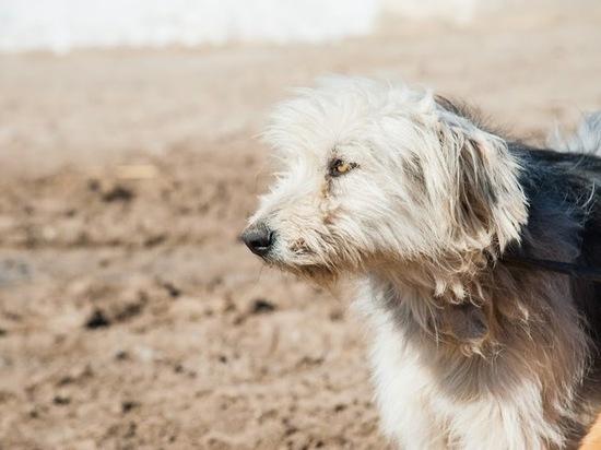 Под Волгоградом ввели карантин по бешенству из-за больной собаки