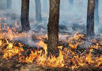 Жителям Серпухова напомнили о пожарной безопасности на природе