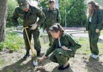 Недалеко от Серпухова высадили молодые сосны
