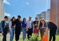 Голубые ели высадили в Серпухове