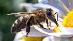 Жители Хакасии пересылают друг другу видео, где пчелы открыли бутылку с газводой