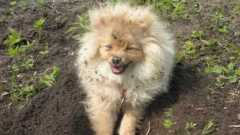 Жители села Калинино жалуются на соседку, которая берет собак на передержку
