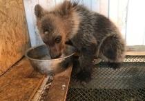 Житель Чебаркуля рассказал, как у него дома появился медвежонок, устроивший переполох на пляже