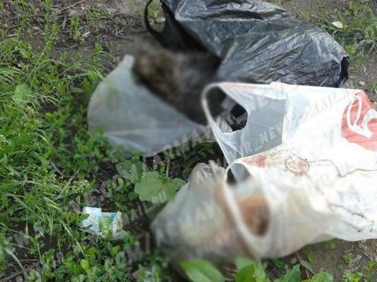 Армавирцы нашли на детской площадке пакеты с трупами собак