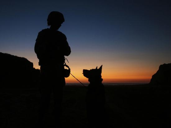 Собаки той же породы, что помогли ликвидировать лидера ИГ, начали охранять границы РФ