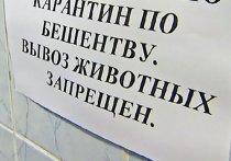 В одном из районов Ивановской области введен карантин по бешенству