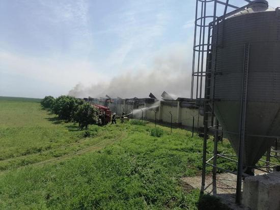 Более 12 тыс поросят погибли при пожаре на донской свиноферме
