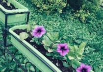Цветы от Союза садоводов украсят Киров