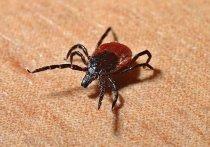 Более 700 жителей Псковской области пострадали от укусов клещей с начала сезона