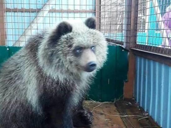 """Животные Центра реабилитации """"Феникс"""" Калуги могут оказаться в зоопарке"""