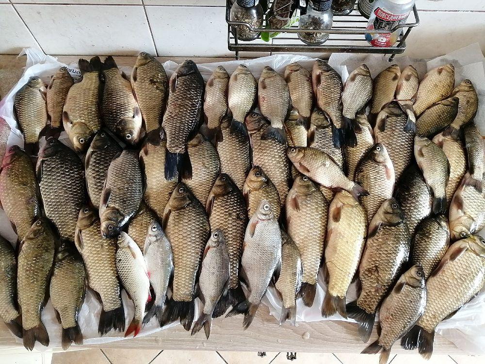 Рыбалка в Рязанской области: фотообзор майских уловов